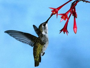 The Flight of the Hummingbird - Plantique Landscaping